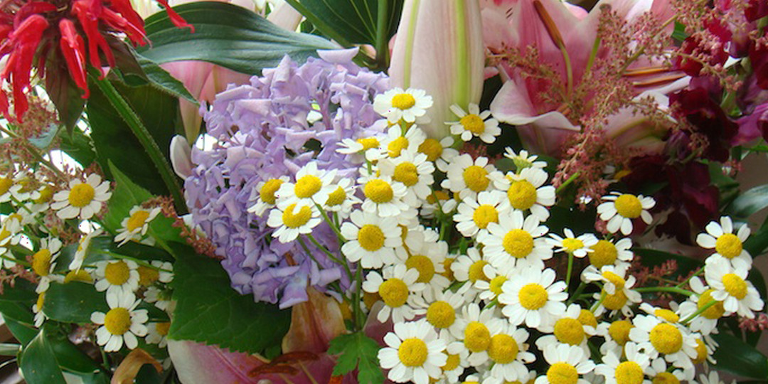 Blumenpracht aus dem Bauerngartl